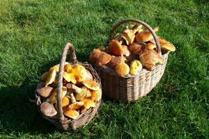 Prořezaný ořech a jak se sbírají houby