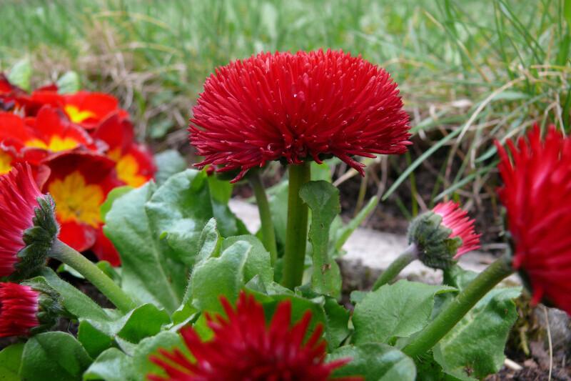 Jarní kytky