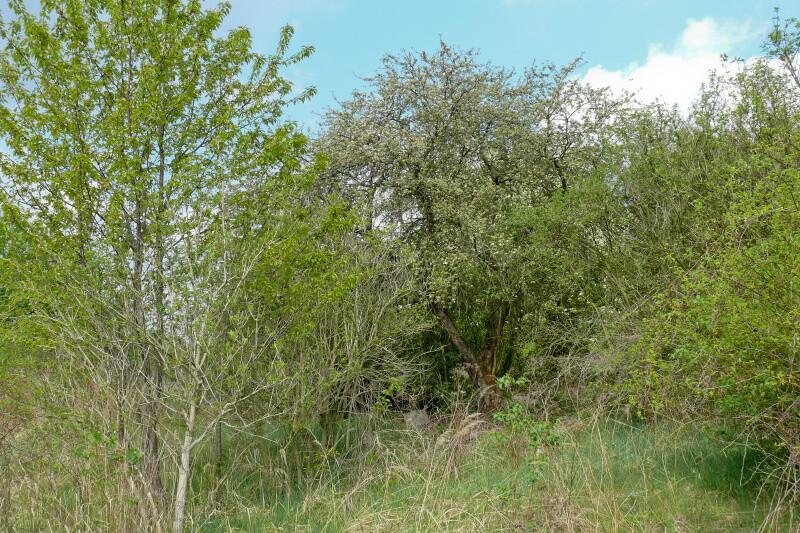 Vaňkovic zahrada