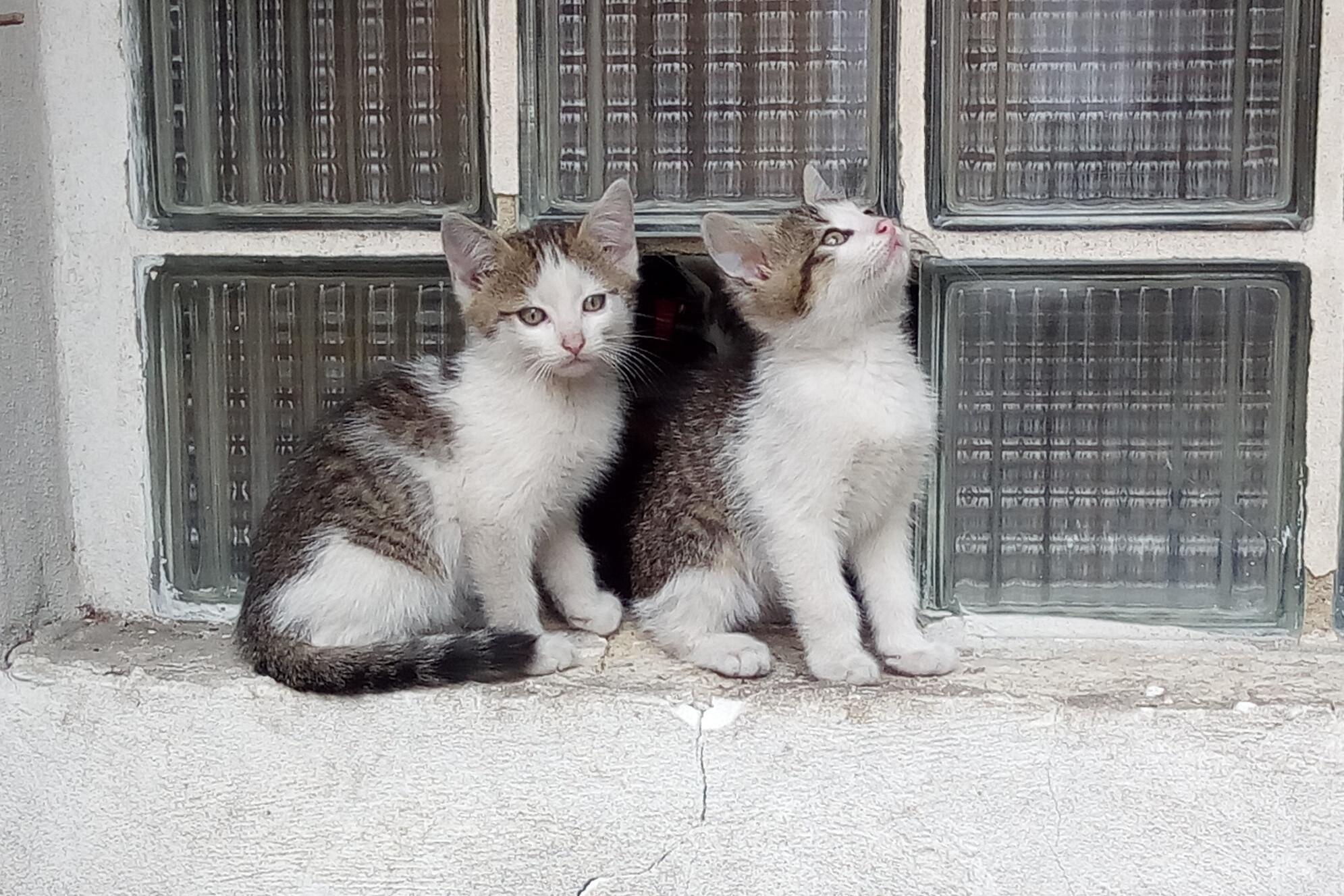 Tak máme zase koťata, paní Müllerová